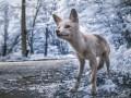 Отголоски прошлого. Белорусский фотограф показал впечатляющие снимки зимнего Чернобыля