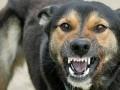 В Николаеве бешенный пес покусал пятерых человек