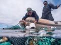 В океане прошла крупнейшая чистка от пластика