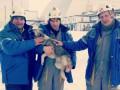 В Чернобыле рабочие сняли собаку с крыши саркофага
