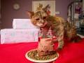 В Британии умерла самая старая кошка в мире