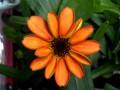 На борту МКС впервые расцвел выращенный в космосе цветок