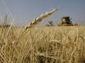 Минагропод подсчитал количество собранного в этом году зерна в Украине