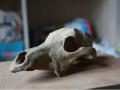 Раскопки на Почтовой: археологи нашли новые объекты