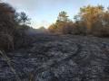 В Одесской области потушили масштабный пожар в лесном массиве