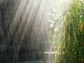 Погода на выходные: два дня будут дожди
