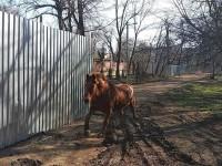 В Одессе конь Боня сбежал из зоопарка и покуролесил на воле
