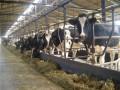 Мясо и молоко Украины попадут на рынок Европы не ранее 2015 года - Фитосанитарная служба