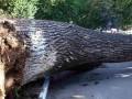 Под Львовом упавшее дерево травмировало 5 человек