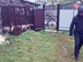 На Буковине нашли мертвой обнаженную женщину