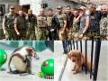 День в фото: Ярош встретил Савченко, пингвин-предсказатель и собака-застревака