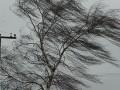 Непогода во Львовской области: штормовой ветер валит деревья