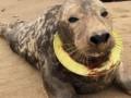 В Британии спасли тюленя, которого душило фрисби