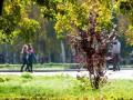 Польша снимает запрет на прогулки в парках