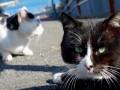 Кошки правят островами: Место, где живут Мурки (ФОТО)