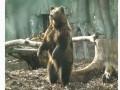 В киевском зоопарке после зимней спячки проснулись медведи
