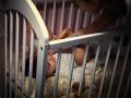 В Одессе горе-мать задушила 4-месячного ребенка