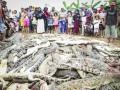 В Индонезии из мести убили почти 300 крокодилов