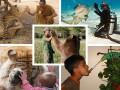Дай пять! Подборка разных животных, подающих лапу (ФОТО)