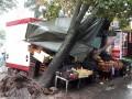 Ливень в Киеве: деревья повалены, движение парализовано
