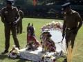 На Шри-Ланке полицейские организовали массовую собачью свадьбу