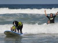 В Калифорнии собак учили серфингу
