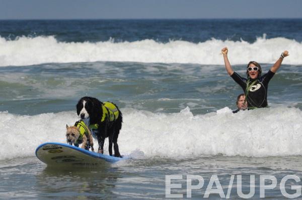 Собаки занимали серфингом у берегов Калифорнии