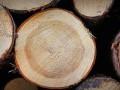 СБУ раскрыла миллионную кражу леса