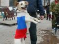 Животные в политике: фото домашних любимцев с флагами России и Украины