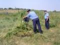 В Луганской области милиция обнаружила пенсионера, который вырастил поле конопли