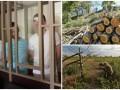 Итоги 7 сентября: Приговор крымским мусульманам в РФ, вырубка деревьев в Киеве и поздравление военных  разведчиков