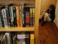 Бригинец заявляет об угрозе ликвидации библиотеки на Прорезной в Киеве