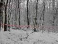 Во Львовской области в лесу обнаружили мертвых отца и сына