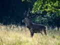 Гослесагентство хочет повысить штрафы за браконьерство