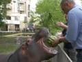 Мэр Киева Кличко угостил арбузами слона с бегемотом и показал видео