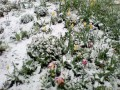 Чернигов засыпало майским снегом