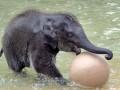 Животные недели: первые шаги носорога и игра в мяч слоненка