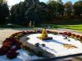 На Певческом поле в Киеве пройдет выставка хризантем