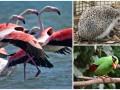 Животные недели: Стаи фламинго, африканский ежик и яванская зеленая сорока