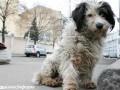 В Киеве мужчина утонул, пытаясь спасти собаку