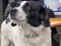 Бездомный пес Колбаса стал звездой интернета