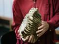 Возле Винницы нашли зуб мамонта, которому 200 тысяч лет
