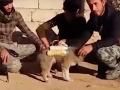 В ИГИЛ щенка-смертника отправили к иракским военным
