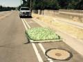 Зеленая слизь из канализации в США напугала местных жителей