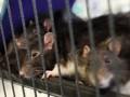 В Киеве на набережной бешеная крыса  укусила школьника