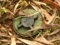 В Широкино найдены заминированные трупы и мины Черная вдова