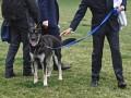 Собаку Байдена отправят на перевоспитание