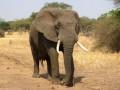 Названа причина массовой гибели слонов в Ботсване