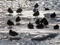 Потепление вызвало подъем уровня воды в некоторых реках Украины