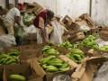 В Испании в бананах нашли шесть тонн кокаина